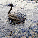 Countries with poor marine safety records linked to oil spill vessels