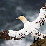 Global trends show seabird populations dropped 70 per cent since 1950s