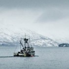 Climate change could cut First Nations fisheries' catch in half
