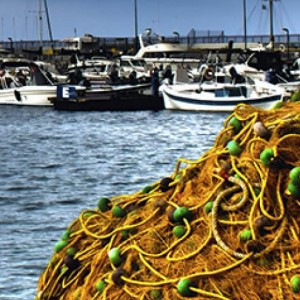 30 per cent of global fish catch unreported