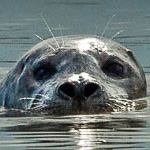BC Marine Mammal Symposium