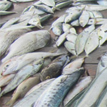 Seafood supply altered by climate change