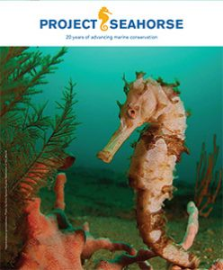 Project Seahorse celebrates 20 years of advancing marine conservation