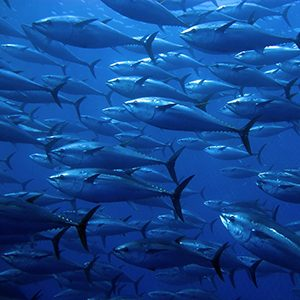 UN starts a Conservation Treaty for the High Seas