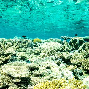 Going diving in the tropics? Don't eat the reef fish!