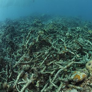 Coral reefs suffering in Philippines despite outlawing damaging fishing practices