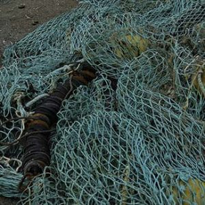 Bottom trawling causes deep sea fish populations collapse