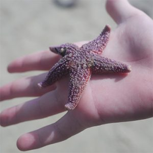 Sea Stars: the Trilogy