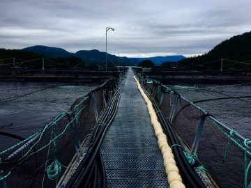 Visiting the Greig Salmon Farm and the BC Centre for Aquatic Health Sciences