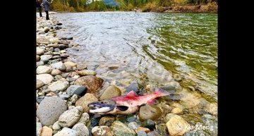 Xia Meng – Adams River