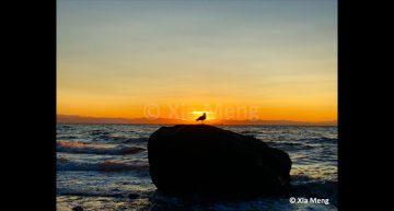 Xia Meng – Seagull Wreck Beach