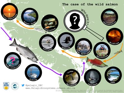 The case of the wild salmon