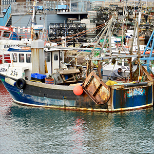 COVID-19 and BREXIT can help with the recovery of UK fish stocks