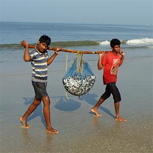 Updating Sea Around Us' 1950-2010 marine catch reconstructions to 2018