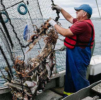 High cod catches could have been sustained in Eastern Canada for decades, simple stock assessment method shows