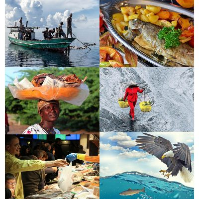 Towards sustainable, resilient and just food systems and the role of aquatic foods